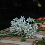 onion blossom, rosemary, salmon sandwiches