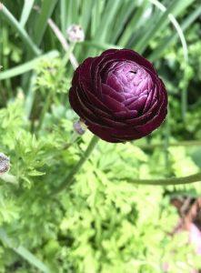 single purple flowerr